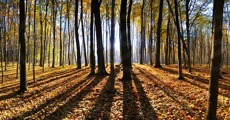 shade of trees in the forest panoramic photo