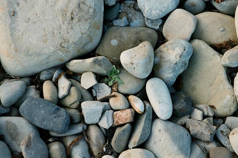 Rocks stones beach grass sunset grey blue green day light natural light clean photo