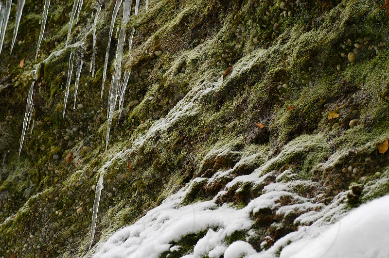 Winter abstract. Ice and snow. Diagonal lines. Green. Growth. Cliff side. photo