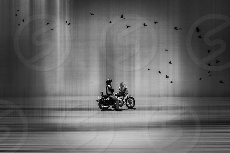 person riding on motorcycle with flock of birds flying in grayscale photo