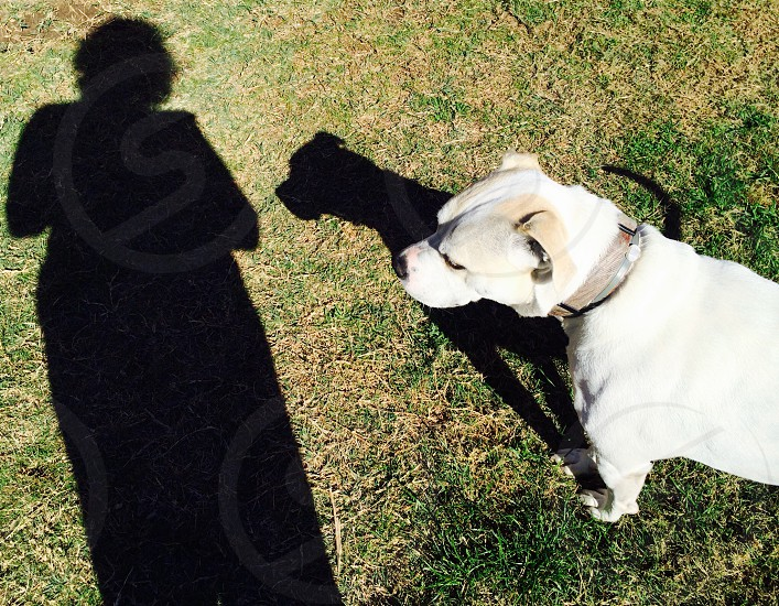 Dog and biped playing with our shadows. The shadow of his tail appears just over his shoulder. photo