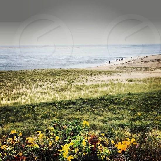 Yellow flowers on cloudy beach day. Chamtham Massachusetts photo