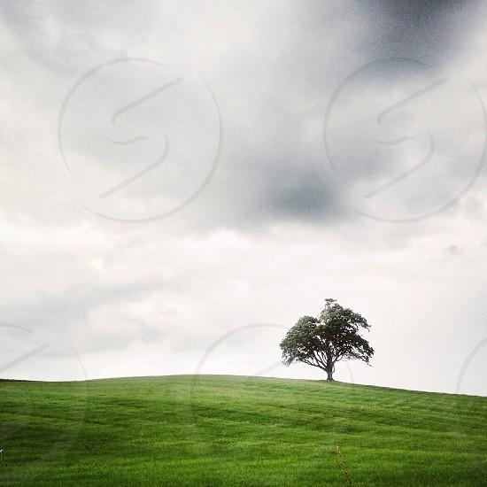 Tree Hill English Countryside  photo