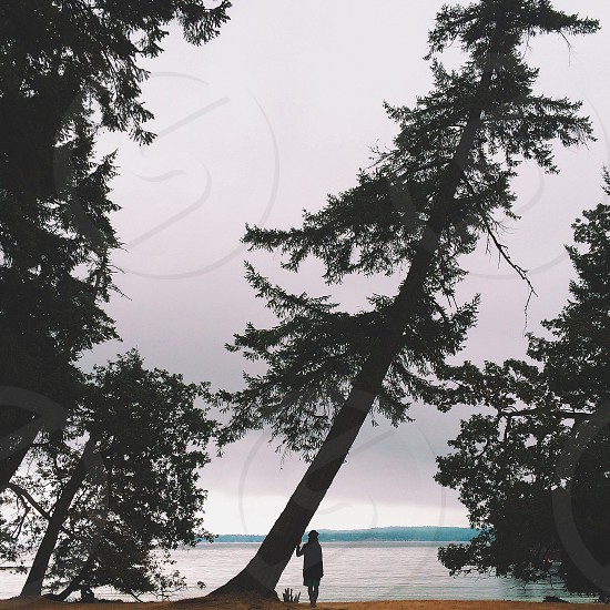 person standing beside pine tree silhouette photo