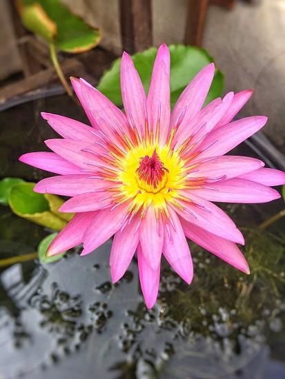 ดอกไม้ photo