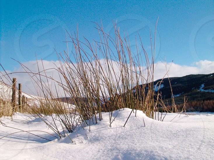 Snow grass mountains photo