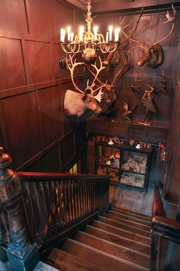 brown moose head on wall beside brown wooden stairs photo