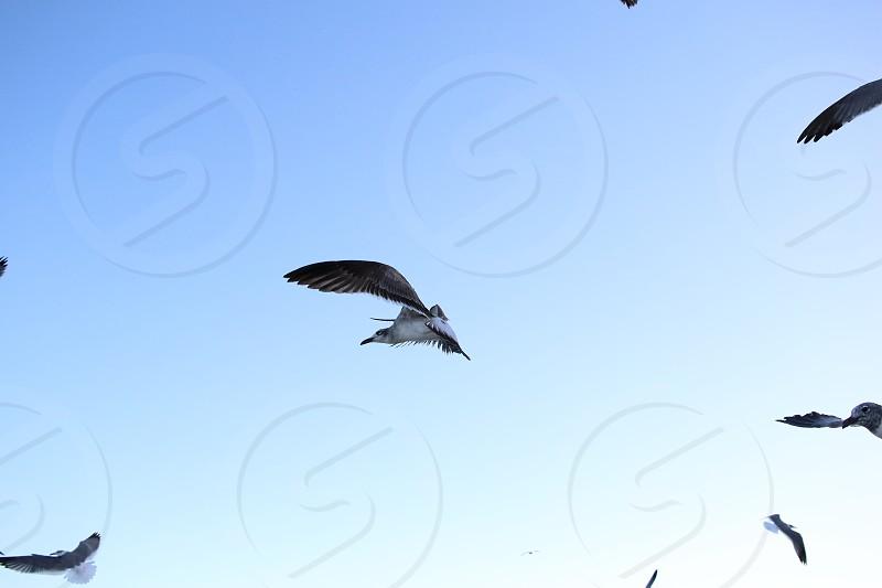miami seagull birds on coastline photo