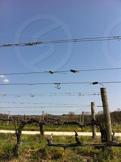 gray barbwire fence photo