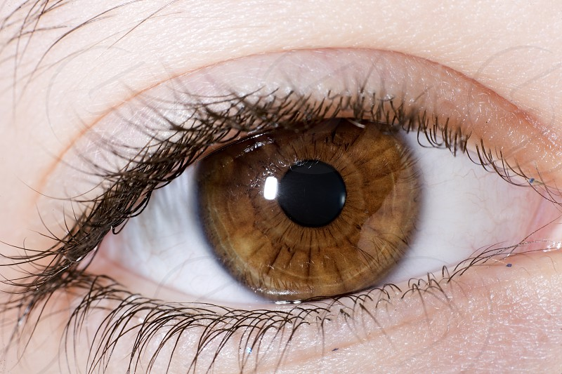 Macrophotography of a brown eye of a girl. Horizontal shot photo