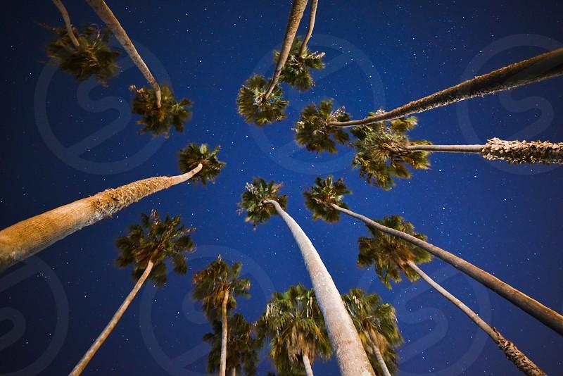 palm trees palms stars california photo