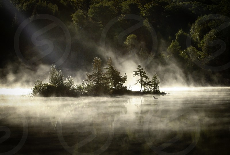 loon island fog morning beam trees lake Maine photo