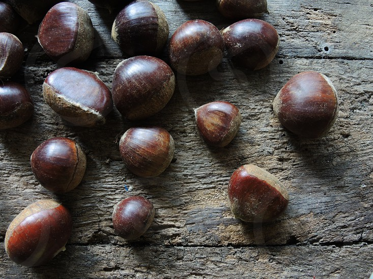 macro photography of brown seeds on top of brown wooden table photo