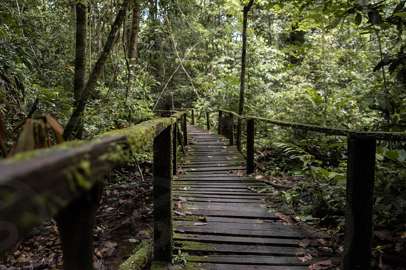 Kubah National Park Kuching Sarawak Malaysia. photo