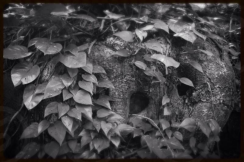 Fairy hideout photo