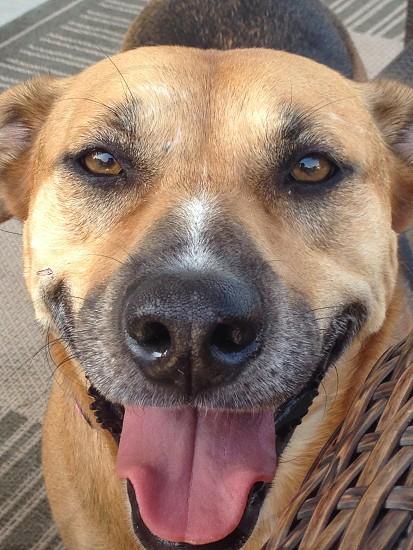 Happy pup photo