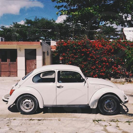 white Volkswagen beetle photo