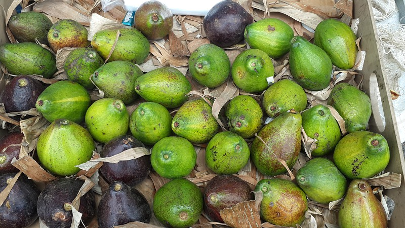 Jamaican avocado pears fresh and delicious. photo