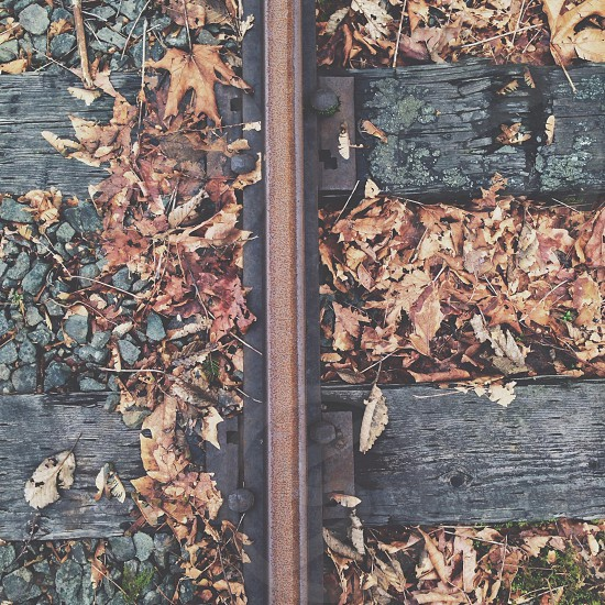 brown leaves on railroad tracks photo
