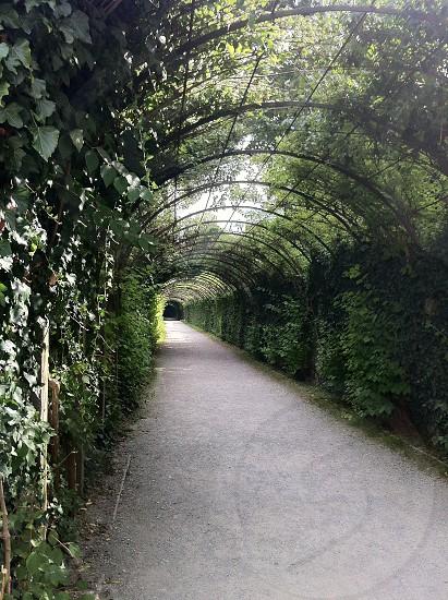 The Sound of Music arboretum  photo