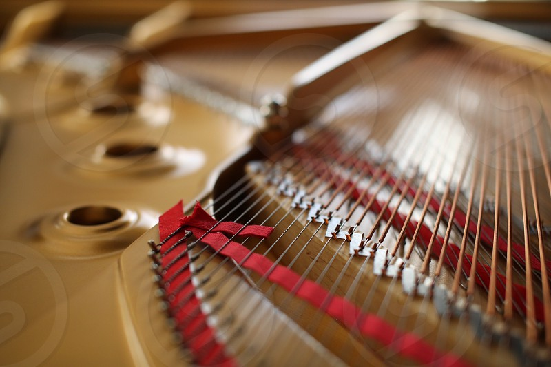 brown string musical instrument photo
