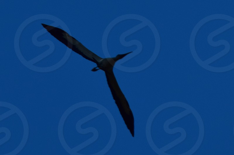 Bird soaring against blue sky photo