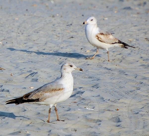 Birds on the beach photo