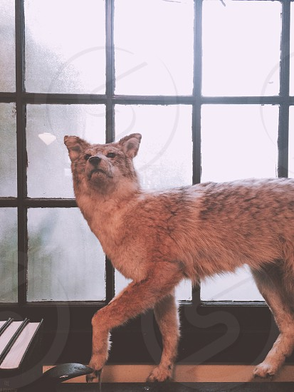 gray animal taxidermy beside set of books in front of window photo