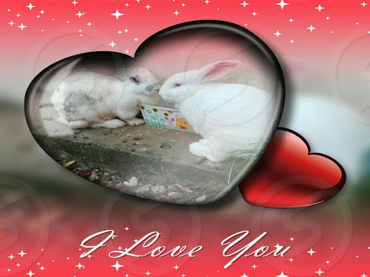 Two cute white rabbit and one with painted black with a cute heart frame you say I love you photo