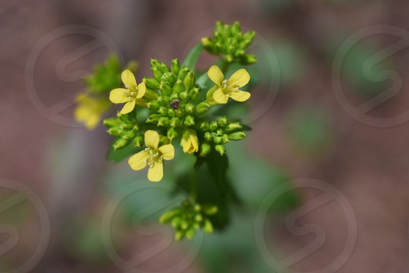 Macro overhead view of a delicate yellow flowered plant photo