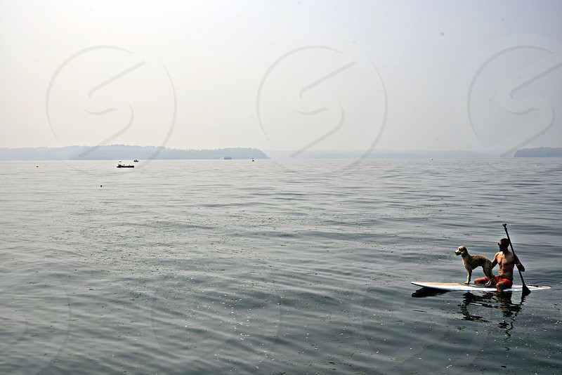 Paddle board paddleboard standup dog landscape patrol watching orca sharks lifeguard recreation yoga exercise dreamy pnw puget sound salish sea pacific ocean photo