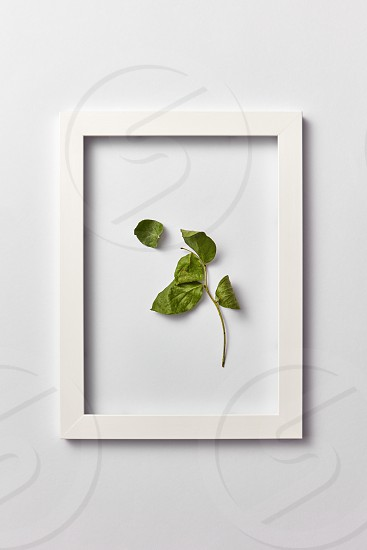Decorative composition from green leaf branch in a rectangular frame on a light gray background. Flat lay place for text. photo