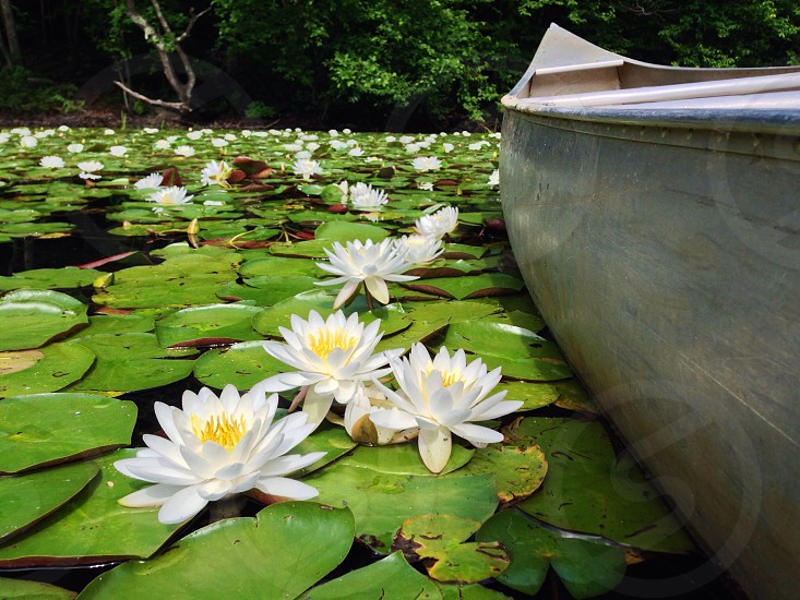 white lotus near brown wooden boat in water photo