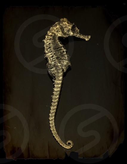seahorse designed silver wall decor photo