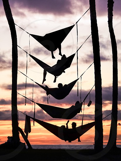 People relaxing on hammocks between palm trees on the beach in Hawaii bunk hammocks silhouette relaxation chill tropical  photo