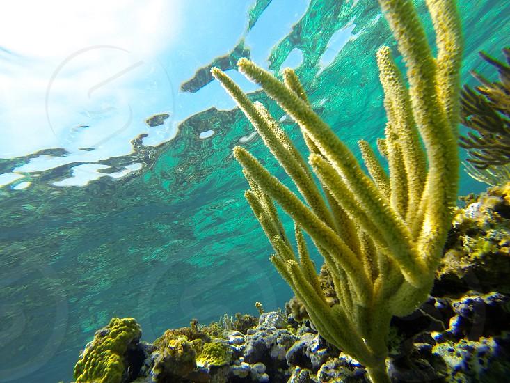 GoPro Hero4 coral offshore of Lighthouse Beach Eleuthera Bahamas photo