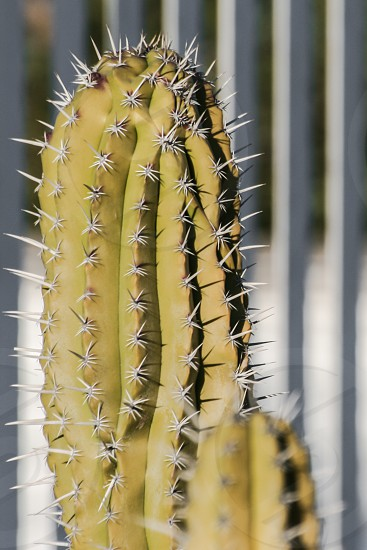 green cactus near white steel fence during daytime photo