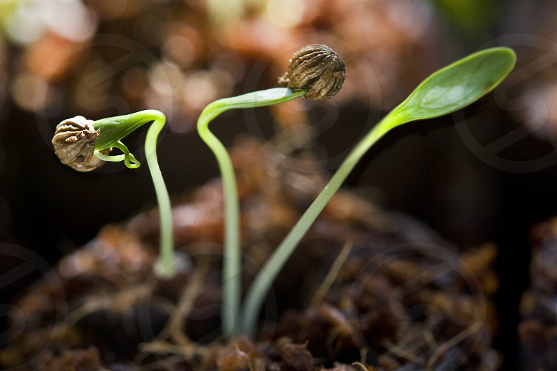 green plant in macro photography photo