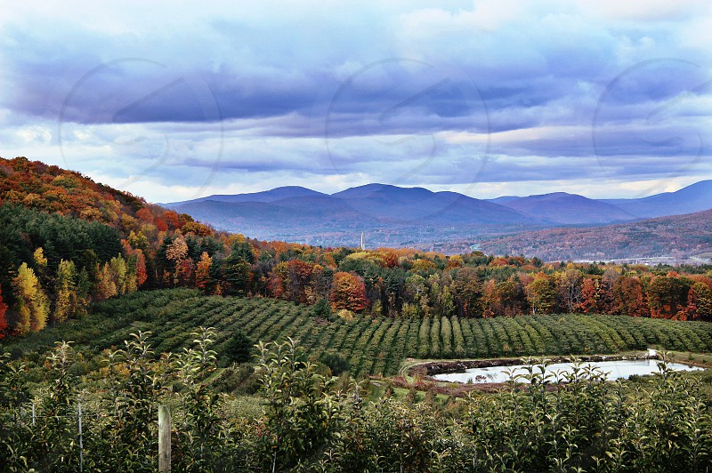 Fall autumn landscape  Apple orchard leaves color colorful  mountains range Bennington  monument rows trees water pond photo