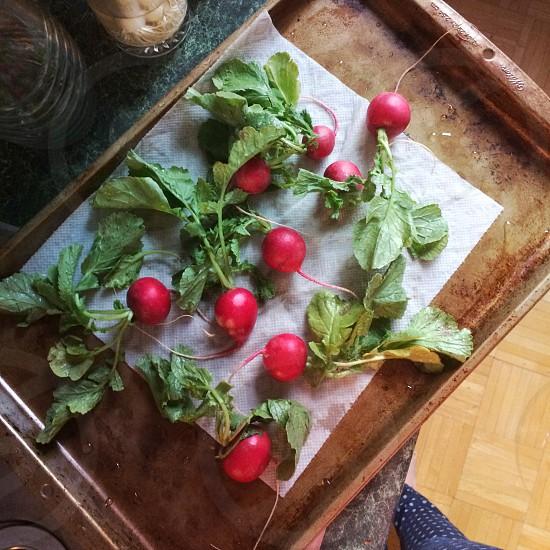 Freshly-washed radishes   food vegetables cooking kitchen garden photo