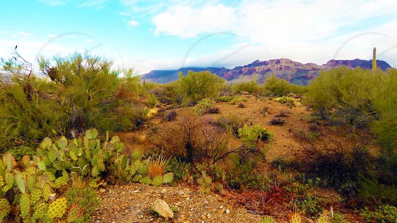 Sonoran Desert near Tucson AZ photo