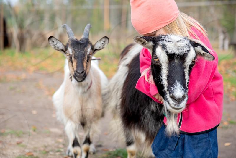Little girl hugging goat photo