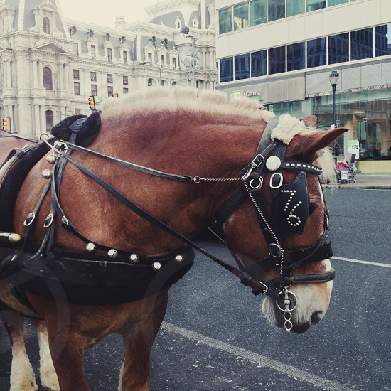 Carriage horse by City Hall. Center City Philadelphia photo