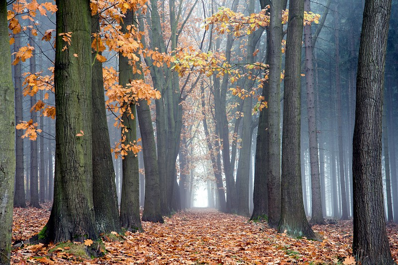 Mysterious fog among the trees in the autumn colored forest. photo