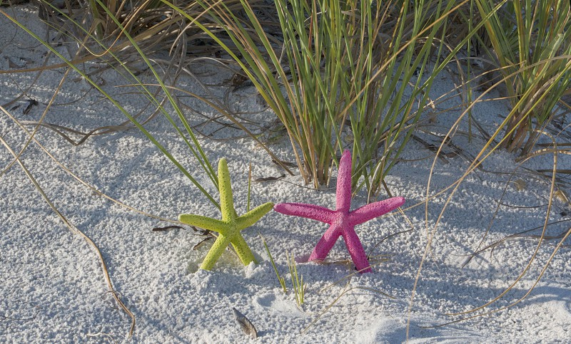starfish colored starfish pink yellow sand sea grass ocean beach vacation summer relax relaxation color picture no people shells photo