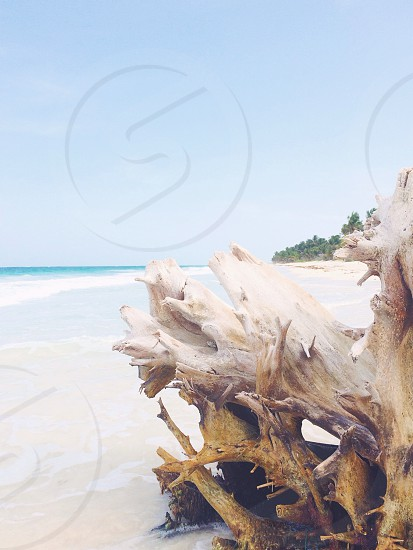 Driftwood on a tropical beach while on vacation to Quintana Roo Tulum Mexico.  photo