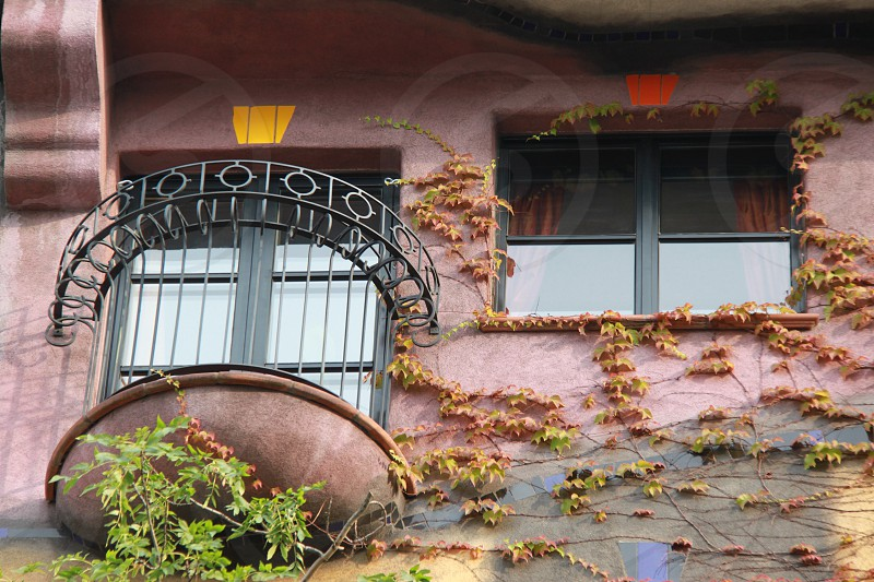 green and brown vine covered wall near balcony photo