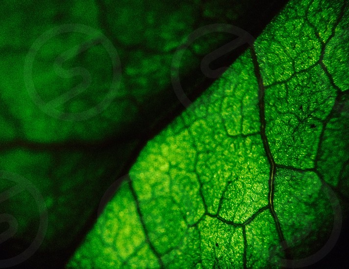 close up photography of green leaf photo