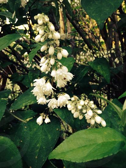 Flower stalk photo