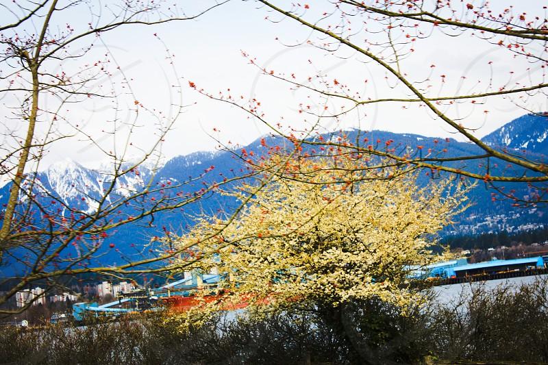 yellow leaf tree photo